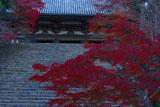 神護寺タカオモミジと金堂