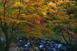梅ケ畑 紅葉と清滝川