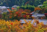 化野の紅葉