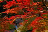 嵯峨鳥居本上地区の紅葉