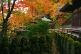 愛宕念仏寺の阿羅漢と紅葉