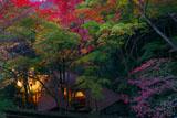 宵の三色紅葉