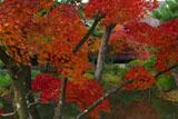 京都等持院 東苑の紅葉