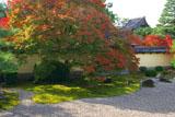 京都等持院 方丈庭園の紅葉