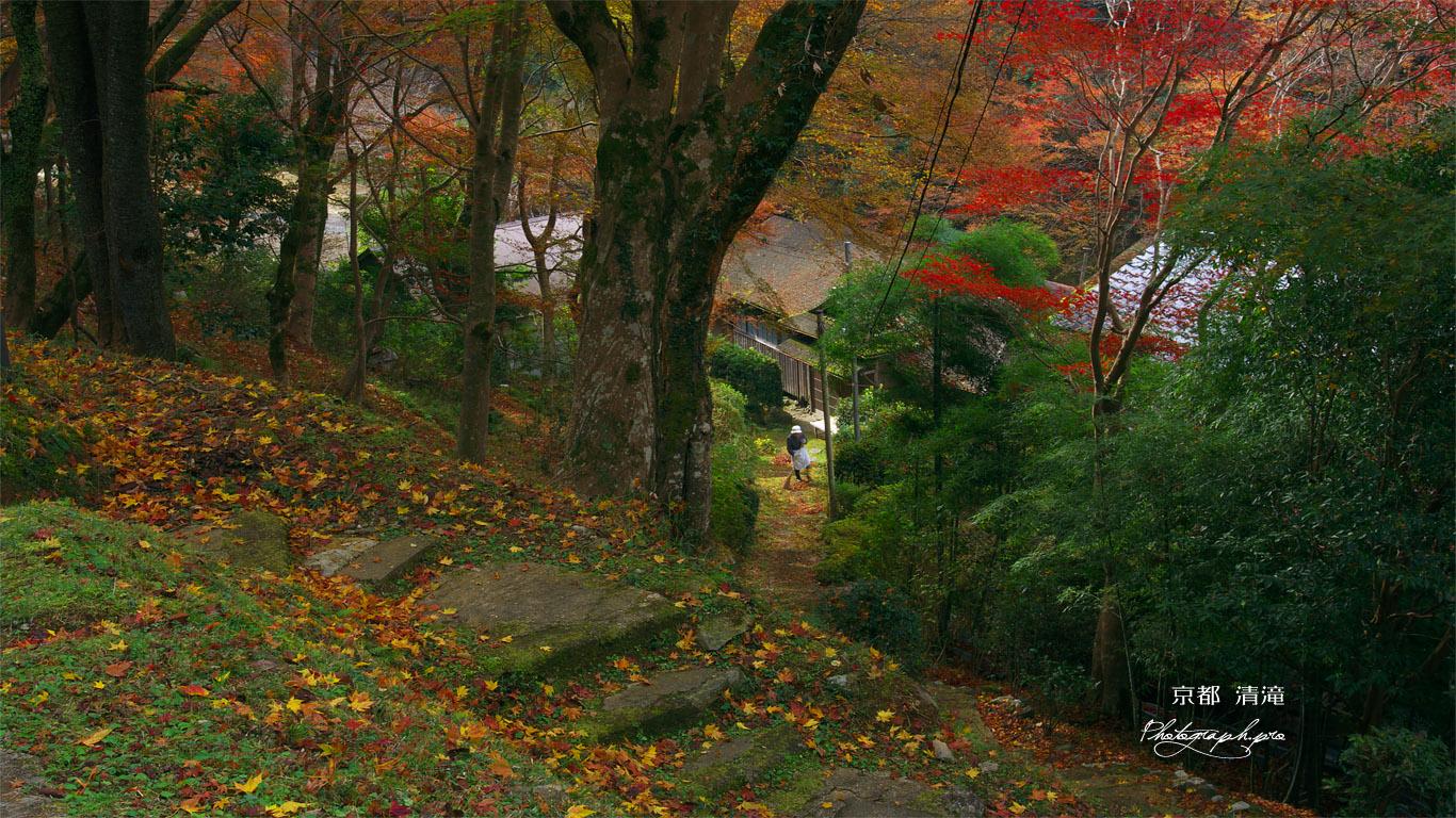 京都清滝 くれない茶屋の紅葉 壁紙