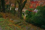 京都清滝 くれない茶屋の紅葉