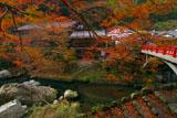 旧ますや旅館と紅葉の清滝川