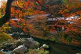 京都清滝 紅葉の金鈴渓