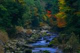 京都清滝 金鈴渓下流の紅葉
