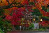 赤山禅院の寒桜と紅葉