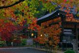 赤山禅院の三色紅葉と拝殿