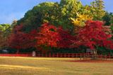 朝陽射す紅葉の上賀茂神社
