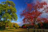 上賀茂神社 馬出しの桜と見還りの桐