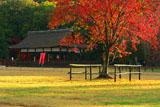 上賀茂神社 馬出しの桜の紅葉
