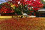 上賀茂神社 勝負の楓の散紅葉