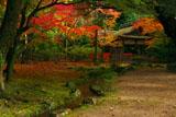 上賀茂神社 賀茂山口神社の紅葉