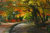 上賀茂神社 ならの小川の紅葉