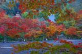 紅葉の永観堂