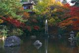 円山公園 瓢箪池の噴水と紅葉