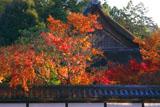 南禅寺天授庵 紅葉と方丈屋根