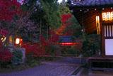 提灯灯る赤山禅院