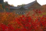 東福寺洗玉澗の紅葉に通天橋と方丈