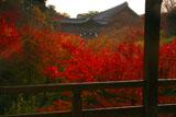 臥雲橋越しの東福寺洗玉澗の紅葉