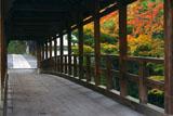 東福寺偃月橋の紅葉