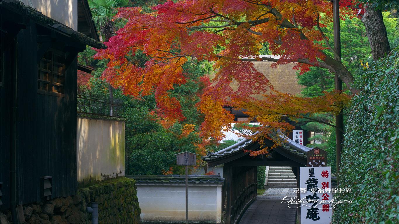 東福寺龍吟庵 紅葉越しに偃月橋と方丈 壁紙