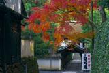 東福寺龍吟庵 紅葉越しに偃月橋と方丈