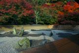 東福寺龍吟庵 紅葉の西庭