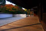東福寺龍吟庵 紅葉の南庭