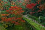 東福寺即宗院 庭園のドウダンツツジ紅葉