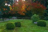 東福寺即宗院 庭園のセンリョウと紅葉