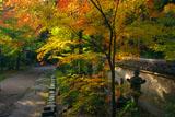 東福寺即宗院 採薪亭跡の紅葉