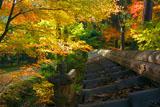 東福寺即宗院 板塀瓦と紅葉