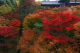 東福寺洗玉澗の紅葉