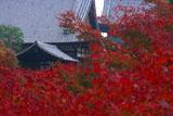 紅葉越しの東福寺方丈と仏殿