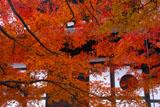 紅葉の東福寺経蔵