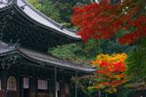 泉涌寺仏殿と紅葉