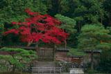 泉涌寺後月輪東山陵の紅葉