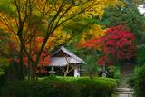 泉涌寺来迎院 三色紅葉