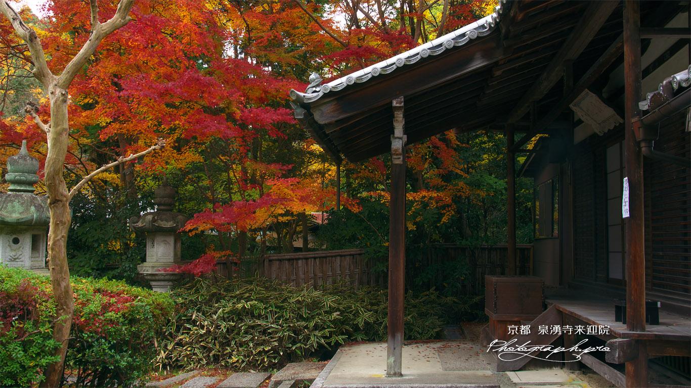 泉涌寺来迎院 本堂と紅葉 壁紙
