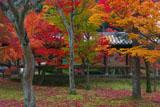 三色紅葉の通天橋