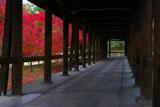 東福寺通天橋歩廊からの紅葉