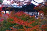 東福寺の通天紅葉