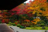 泉涌寺御座所庭園の紅葉
