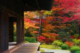 泉涌寺御殿と紅葉
