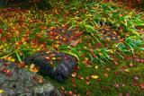 庭園の散り紅葉