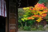 泉涌水屋形と紅葉